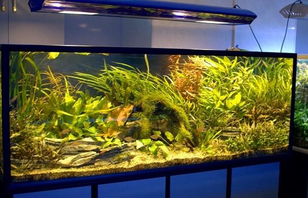 освещение для аквариума особенности