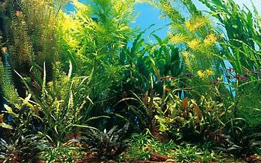 рост растений в аквариуме