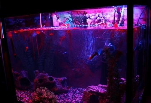 светодиодная лента для аквариума