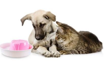 защита проводов от домашних животных
