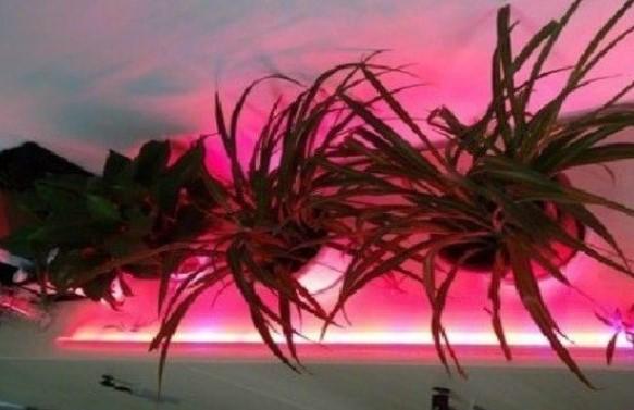 Светодиодная лента для подсветки растений