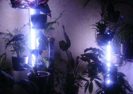 как сделать подсветку комнатных растений