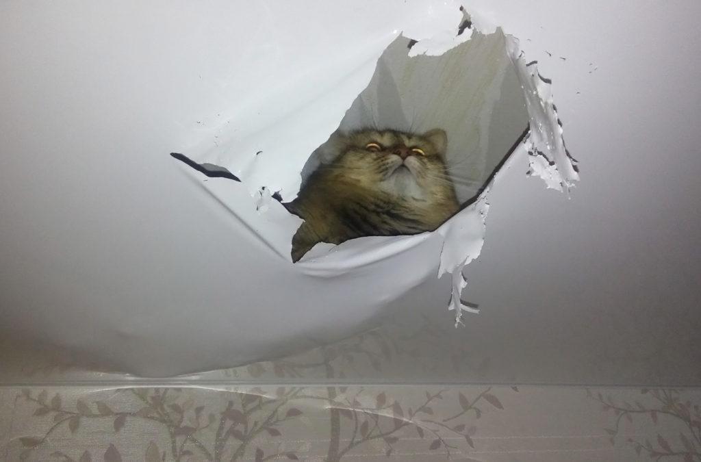 чем закрыть дырку в потолке от люстры