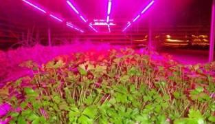 Подсветка растений светодиодной лентой