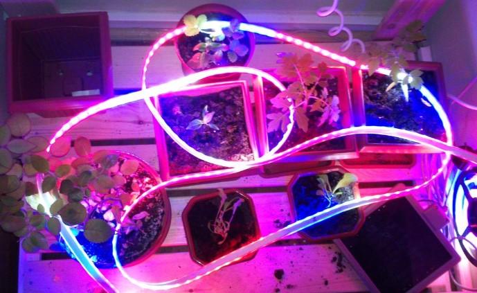 подсветка растений комнатных