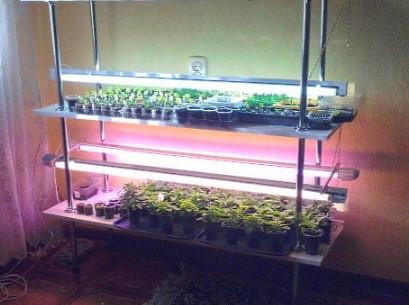 стиллаж для растений комнатных